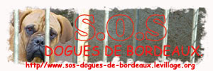S.OS. Dogues de Bordeaux : Association pour le Replacement de Dogues de Bordeaux
